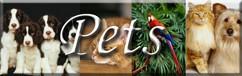 Pets Pins