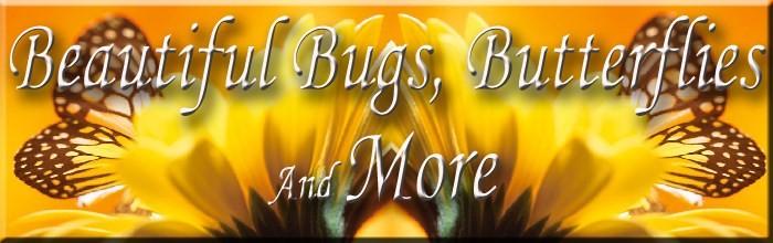 Beautiful Bugs, Butterflies & More